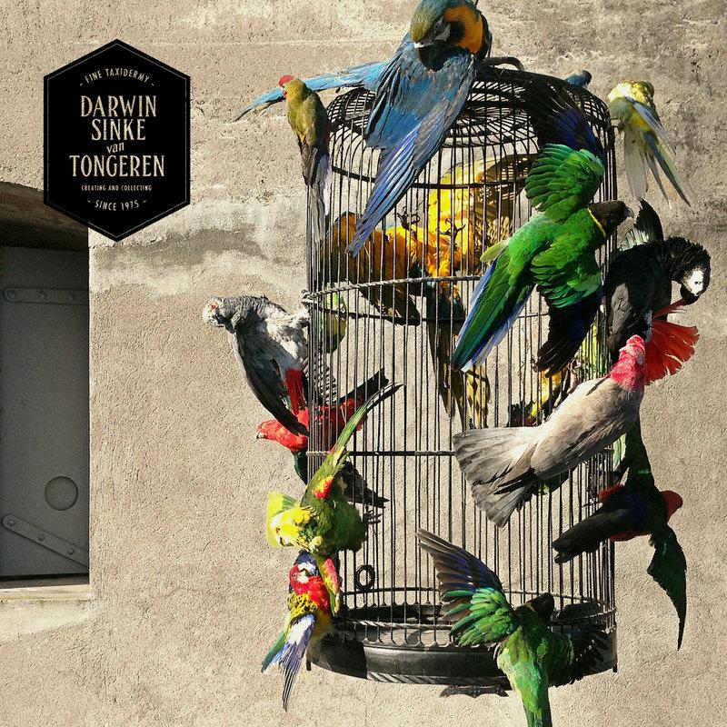 Macaw-Cage-DSVT-2.jpg