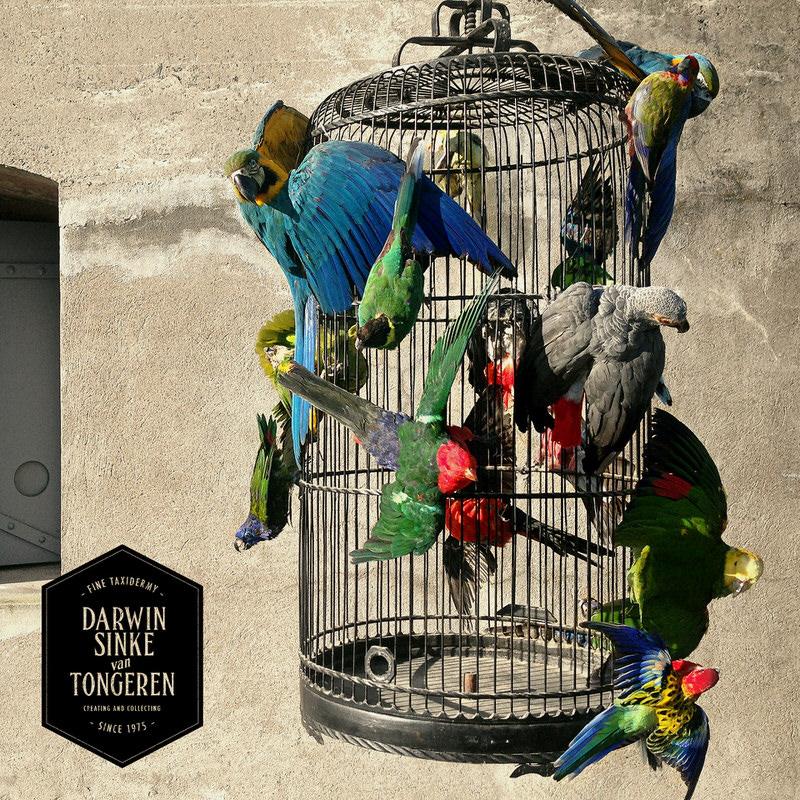 Macaw-Cage-DSVT-3.jpg