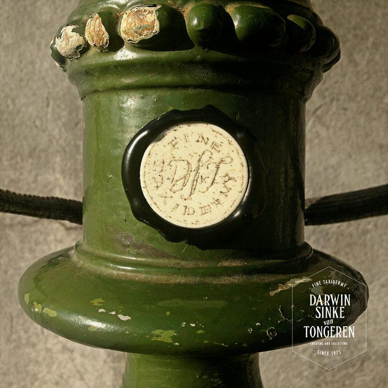 Green-Iguana-DSVT-4.jpg