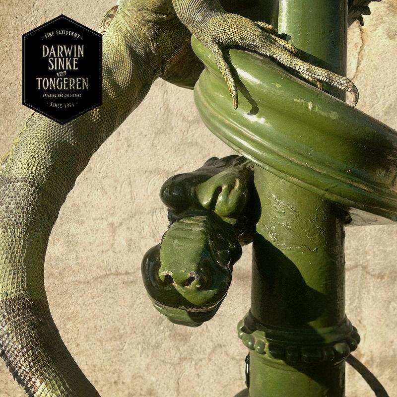 Green-Iguana-DSVT-10.jpg