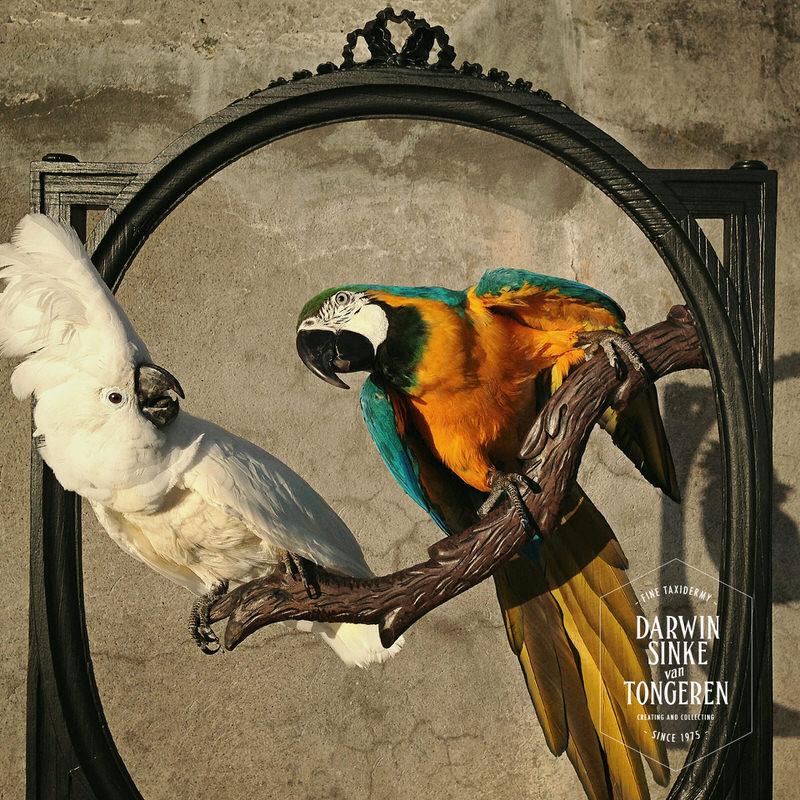 Macaw-Screen-DSVT-4.jpg
