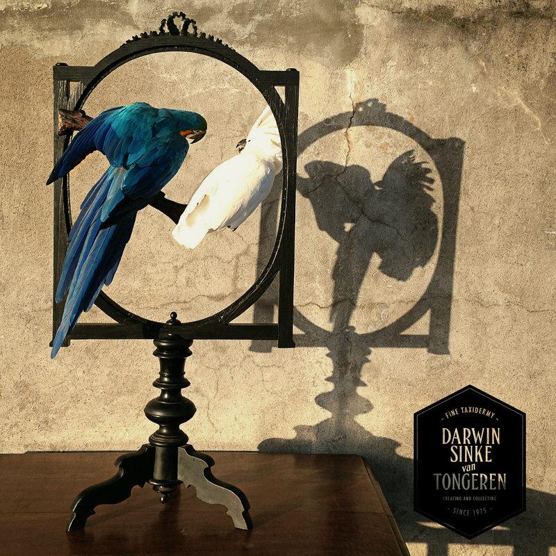 Macaw-Screen-DSVT-5.jpg