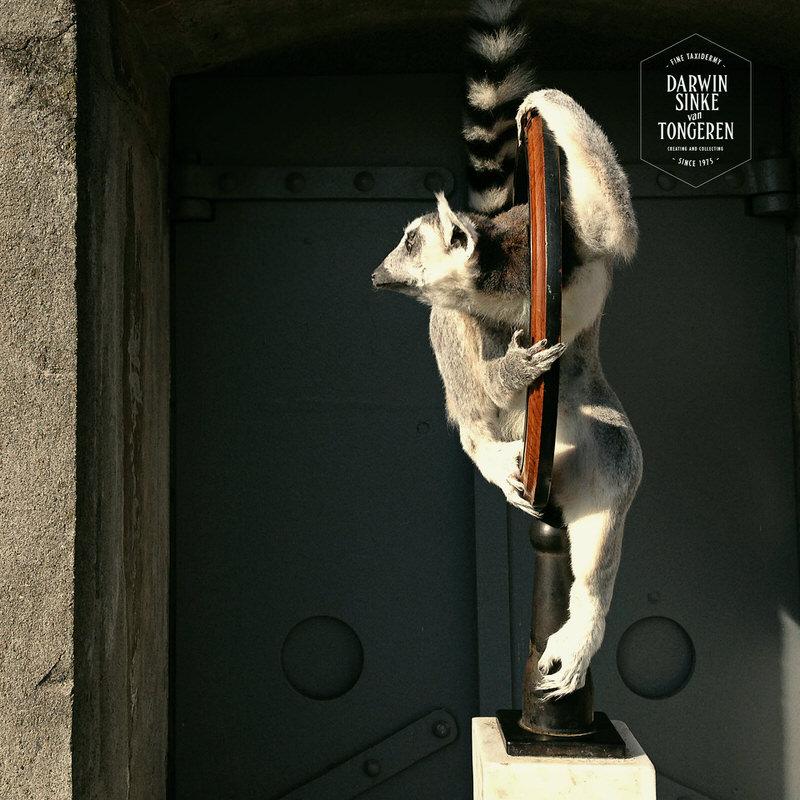 Lemur-Catta-DSVT_3.jpg