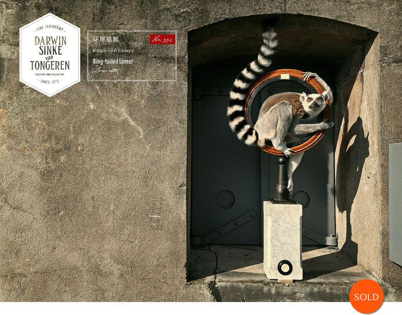 Lemur-Catta-DSVT_1-Sold.jpg