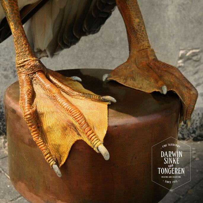 Detail-Pelican-2.jpg