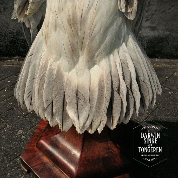 Detail-Pelican-3.jpg