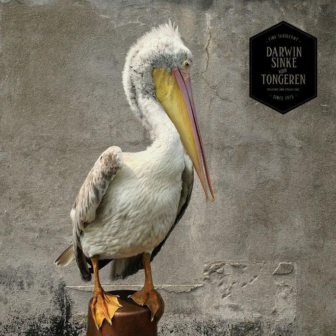 Detail-Pelican-5.jpg