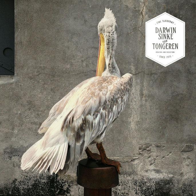 Detail-Pelican-6.jpg