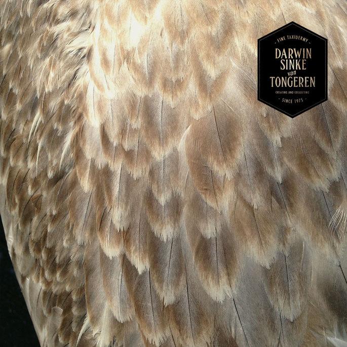 Detail-Pelican-7.jpg