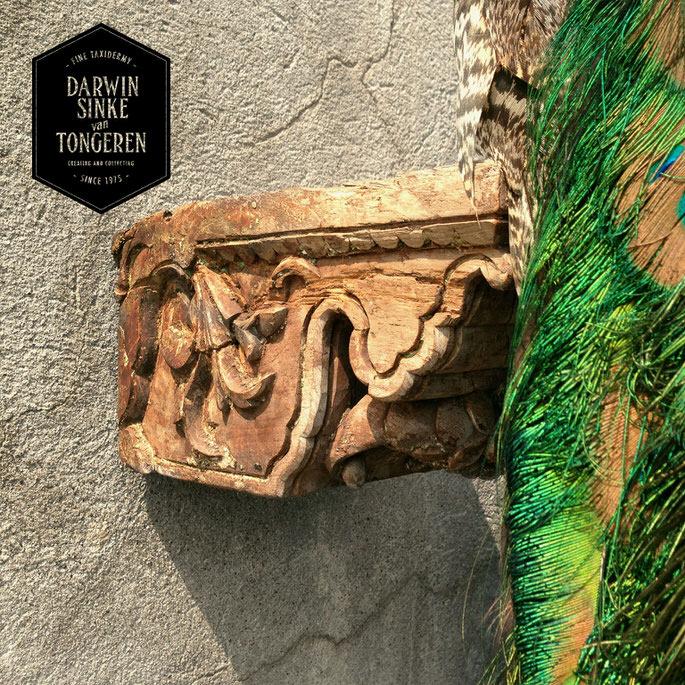Detail-Peacock-5.jpg