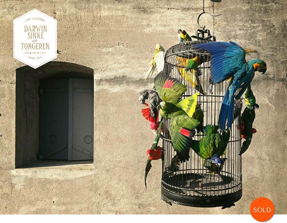 Macaw-Cage-DSVT.jpg