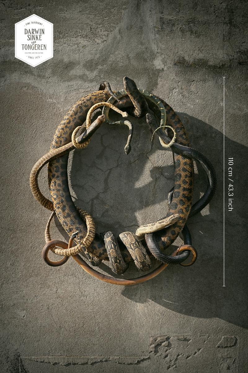 Snake Heraldry.jpg