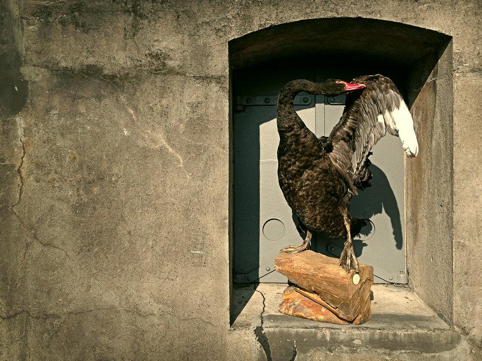 DSvT-Black-Swan.jpg