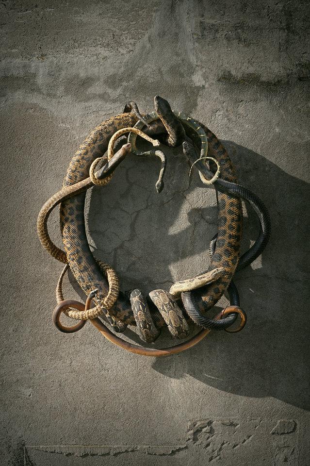 DSvT-Snake-Heraldry.jpg