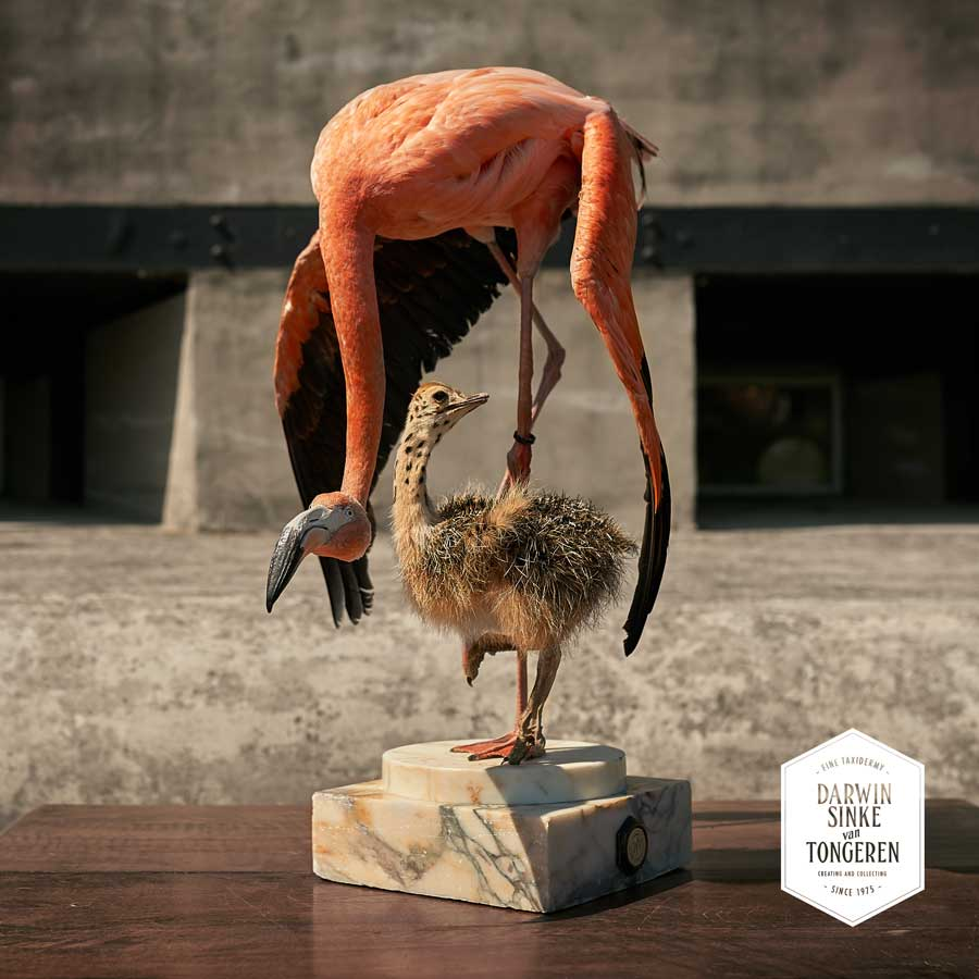 DSvT-Flamingo-Ostrich-2-LR.jpg