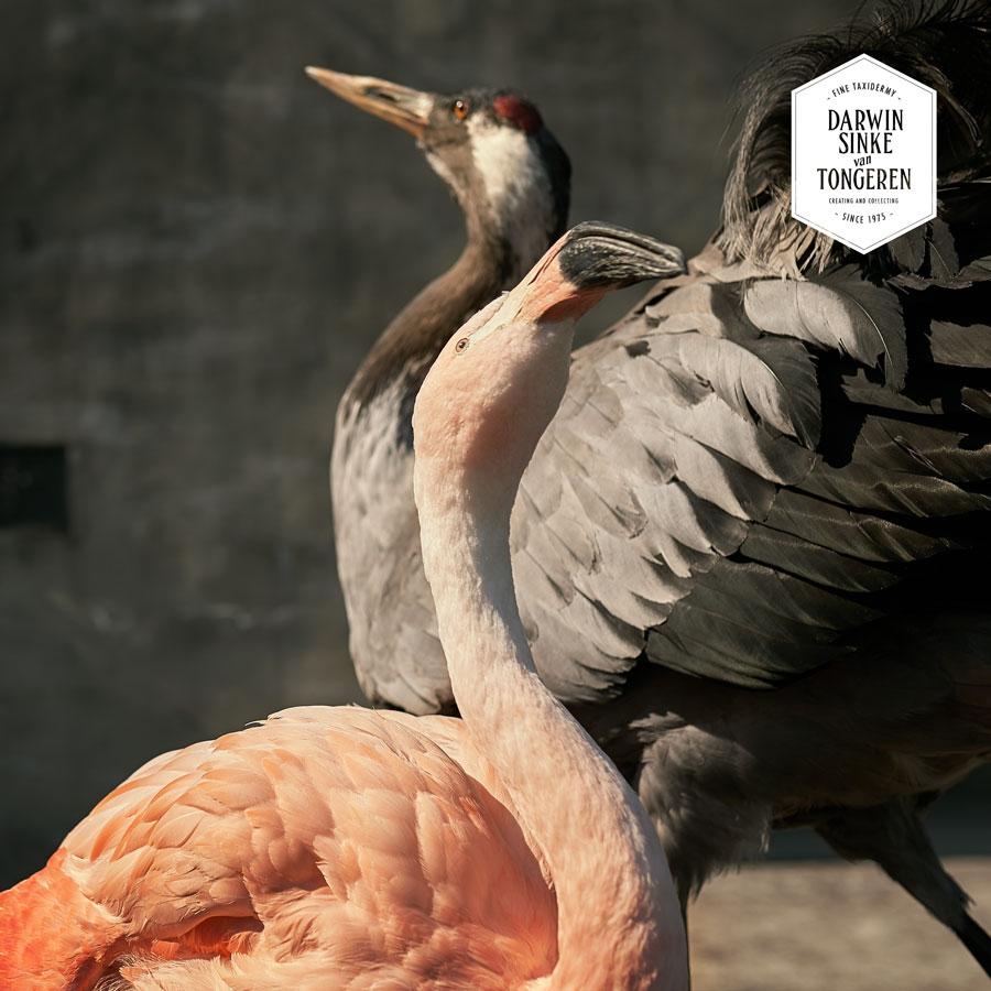 DSvT-Flamingo-Crane-4-LR.jpg