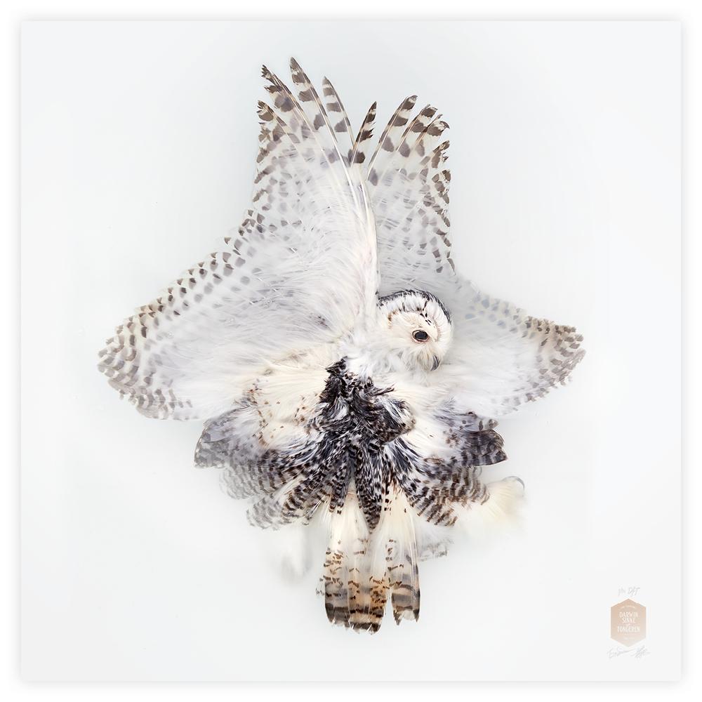 DSvT-160x160-Snowy-Owl.jpg