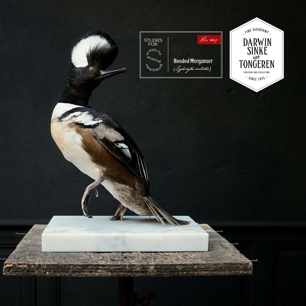 DSvT-Stedelijk-Study-Merganser.jpg