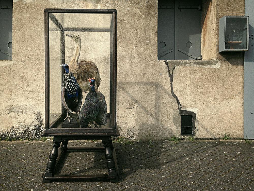 DSvT-Case-Birds.jpg