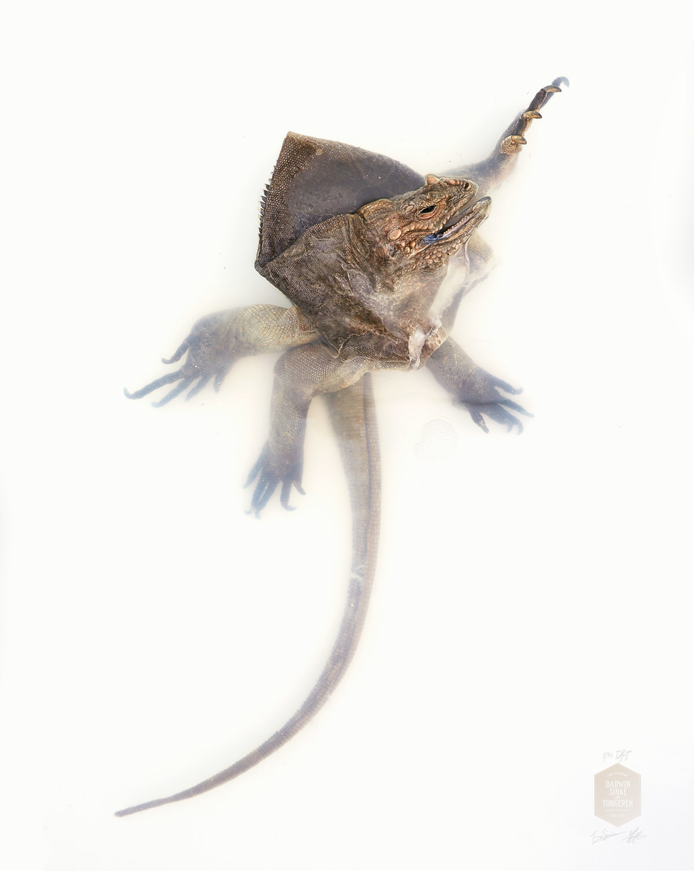 DSvT-Unknown Pose by Rhinoceros Iguana.jpg