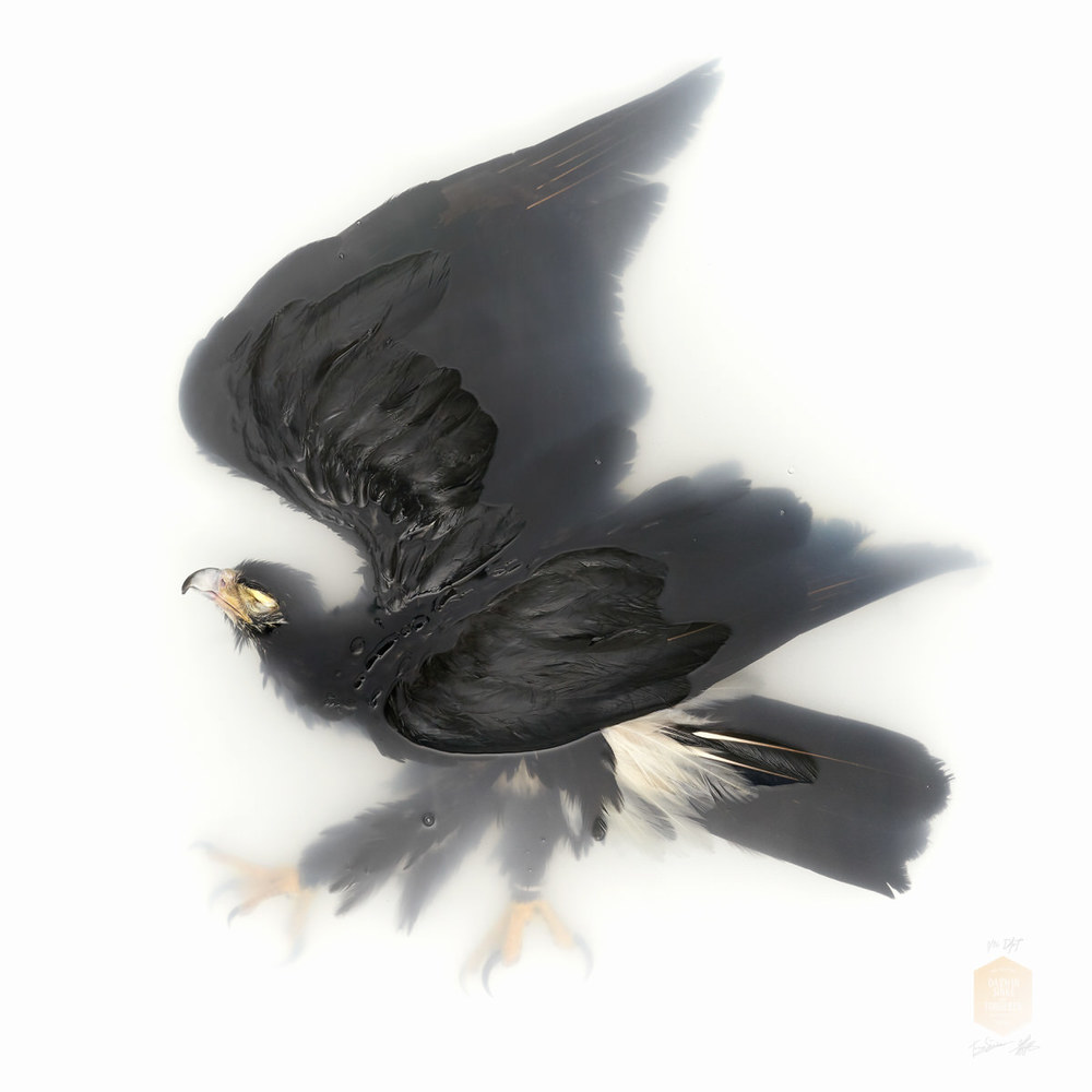 DSvT-Unknown Pose by Black Eagle 40x40.jpg