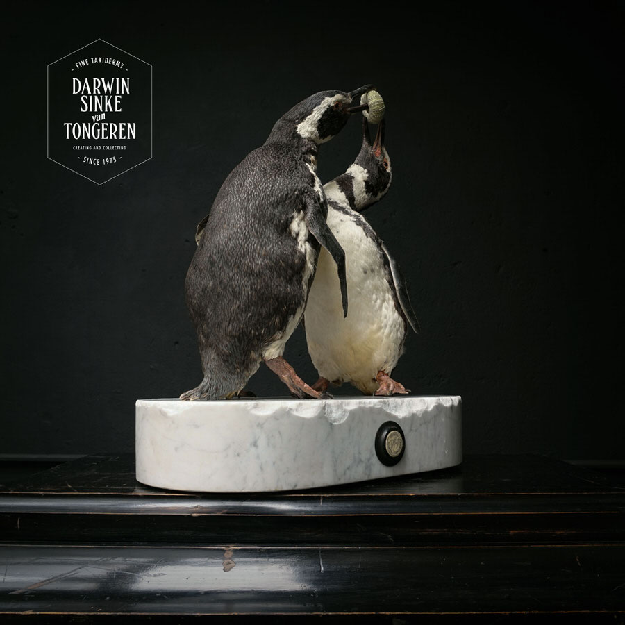 DSvT-Penguins-03.jpg