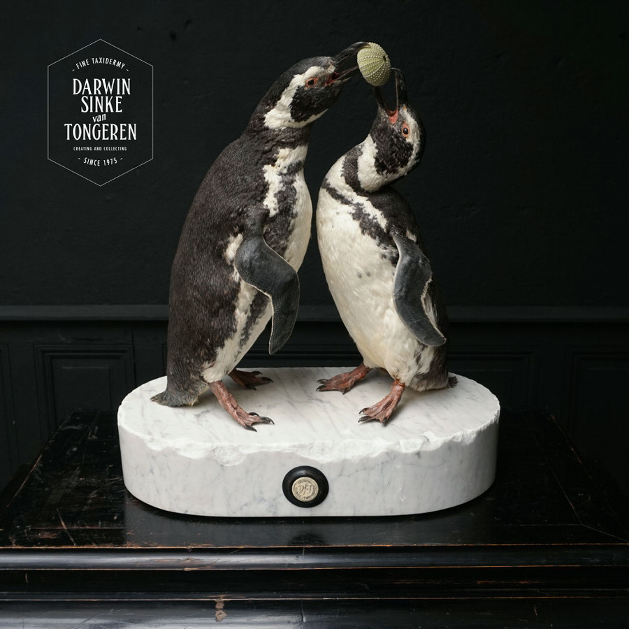 DSvT-Penguins-08.jpg