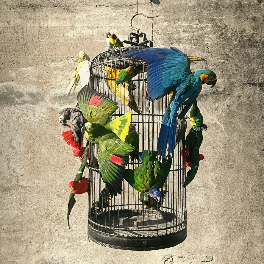Birdcage-VH.jpg