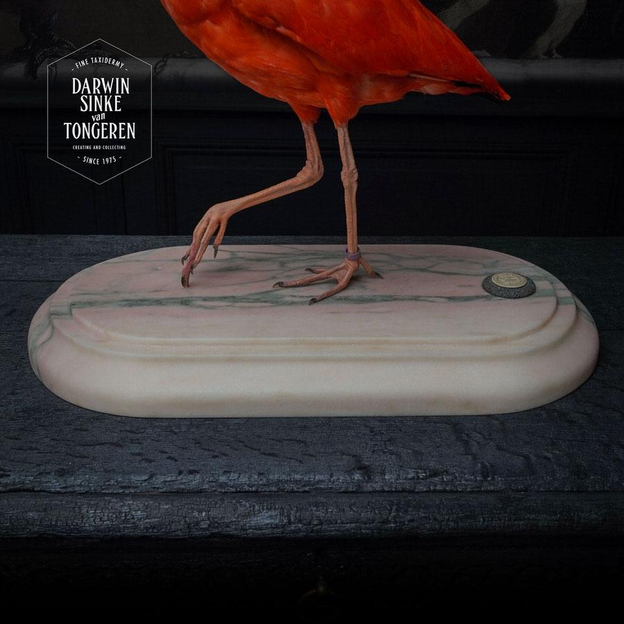 DSvT-Scarlet-Ibis-Square-03.jpg