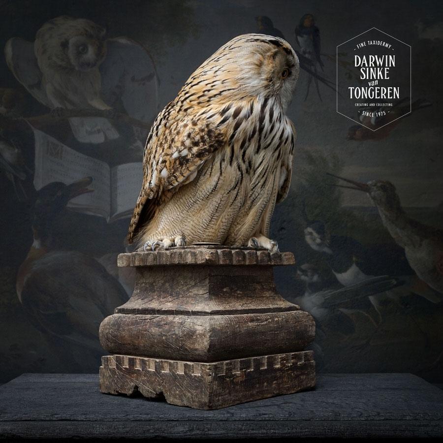 DSvT-Syberian-Eagle-Owl-04.jpg