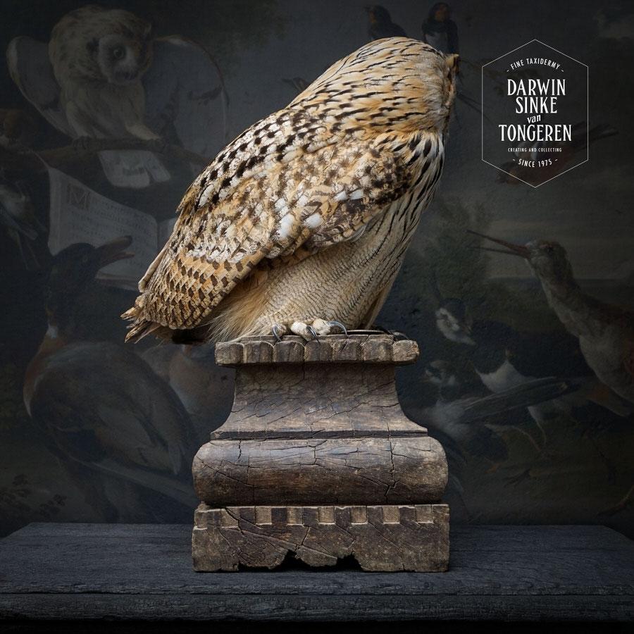 DSvT-Syberian-Eagle-Owl-05.jpg