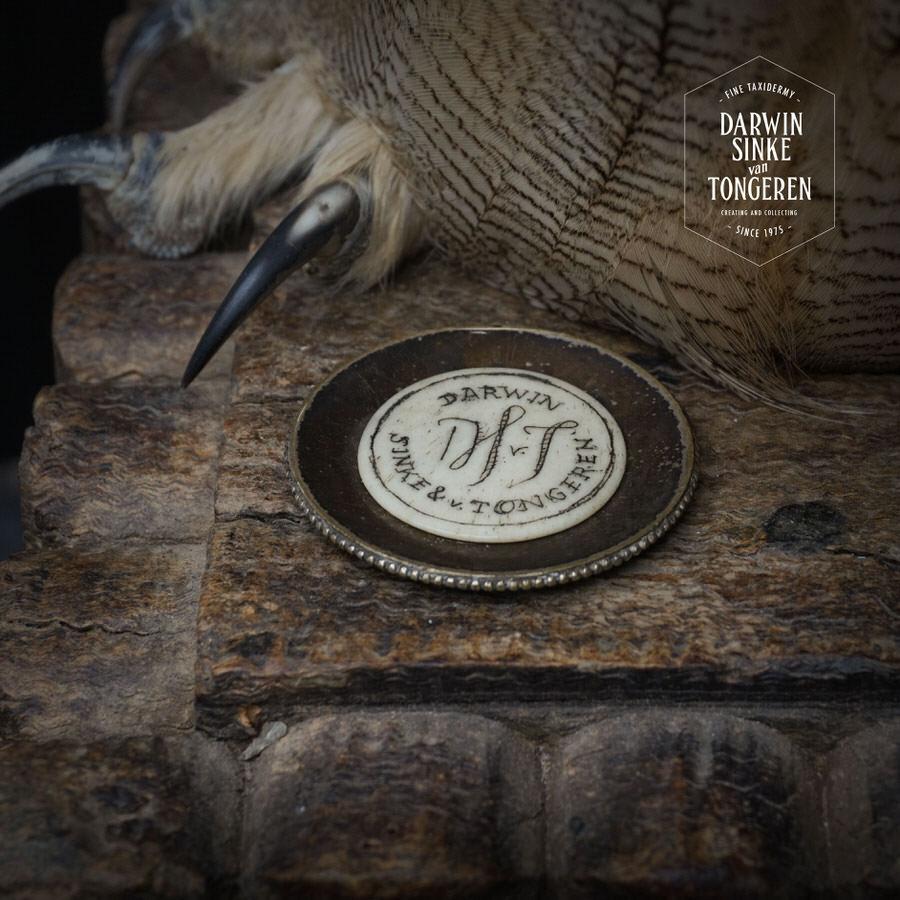 DSvT-Syberian-Eagle-Owl-08.jpg