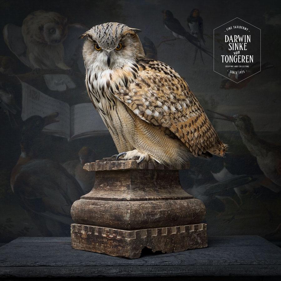 DSvT-Syberian-Eagle-Owl-03.jpg