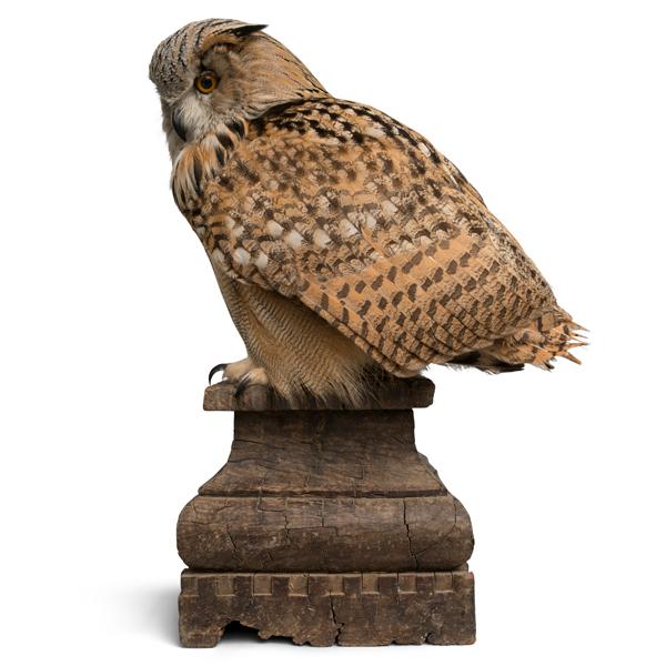 Eagle-Owl-CLIP2.jpg