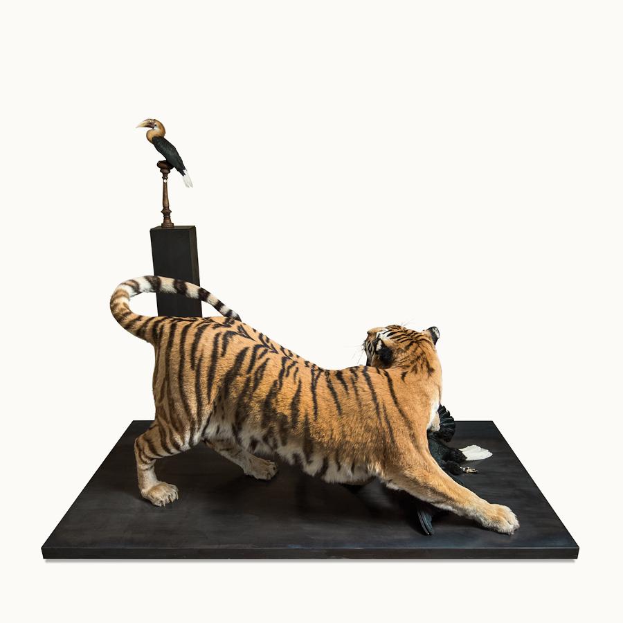 MOA-Amur-Tiger.jpg