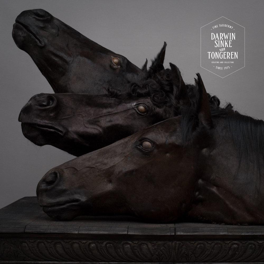DSvT-War-Horses-5.jpg