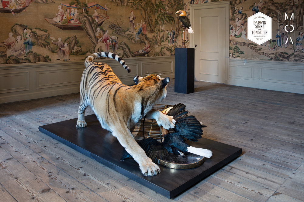 MOA-Amur-Tiger-Fine-Taxidermy.jpg