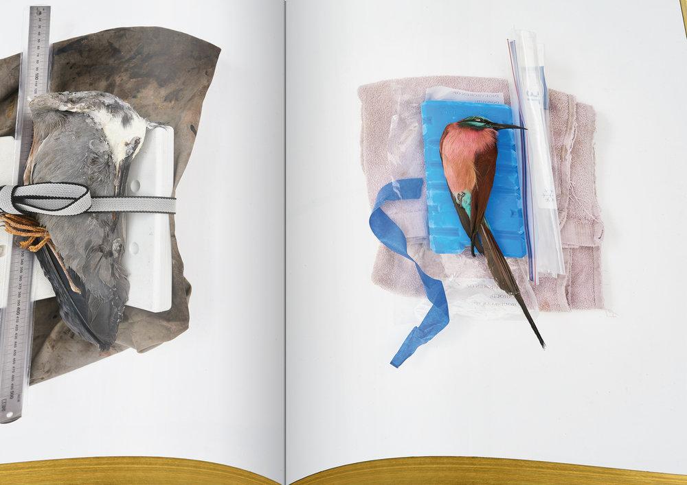 010-DSvT-Our-First-Book-Detail-Frozen-Birds.jpg