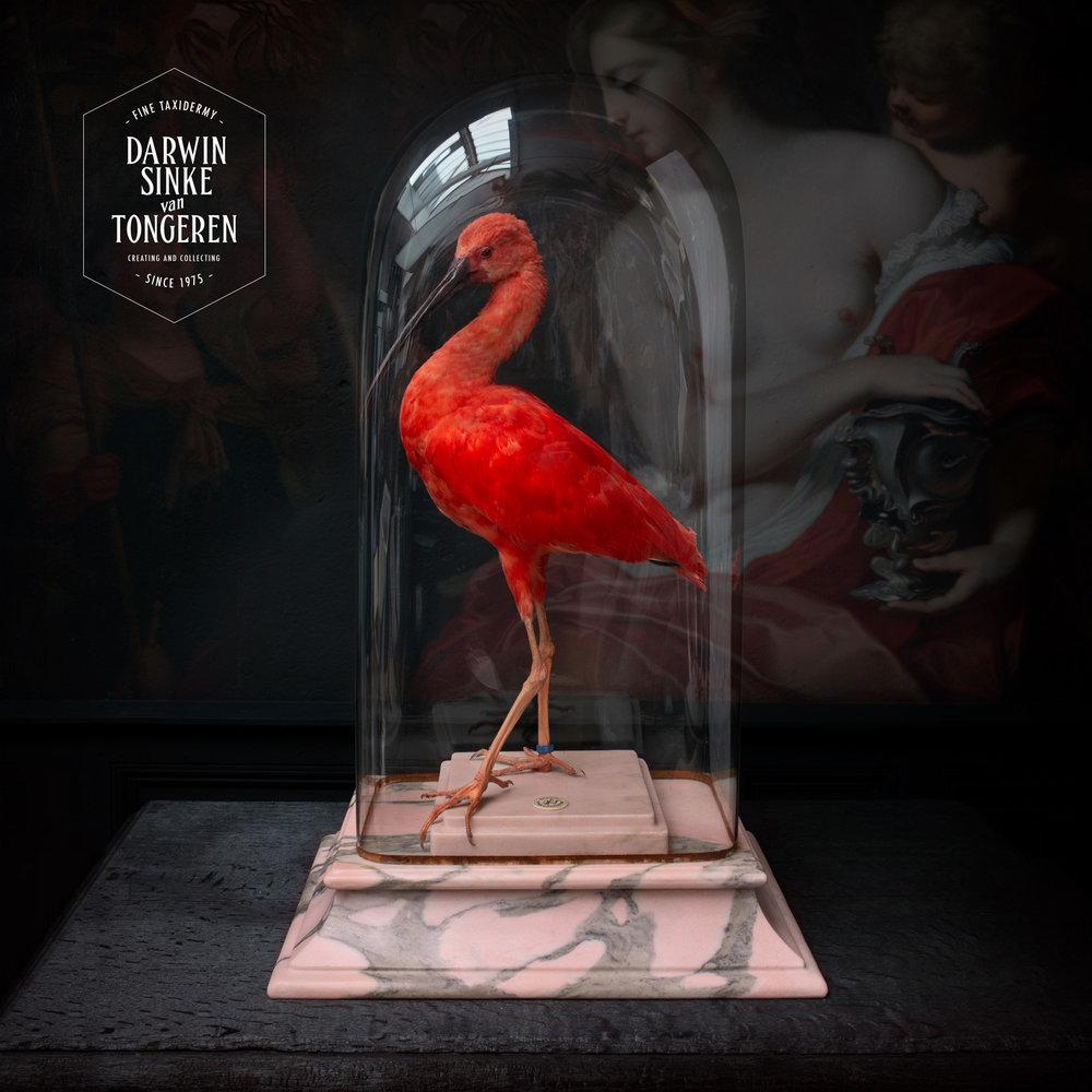 DSvT-Scarlet-Ibis-Rose-Marble.jpg