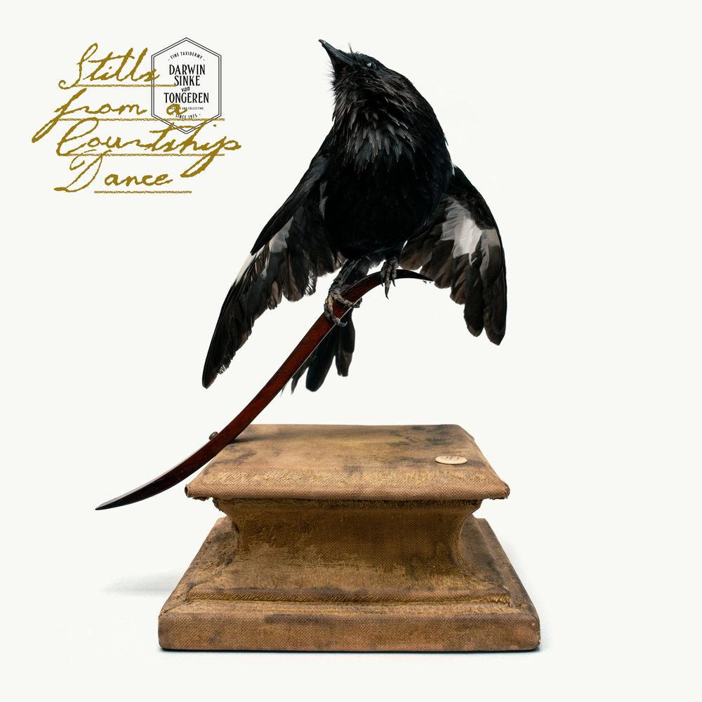 DSvT-Oriental-Magpie-Robin.jpg
