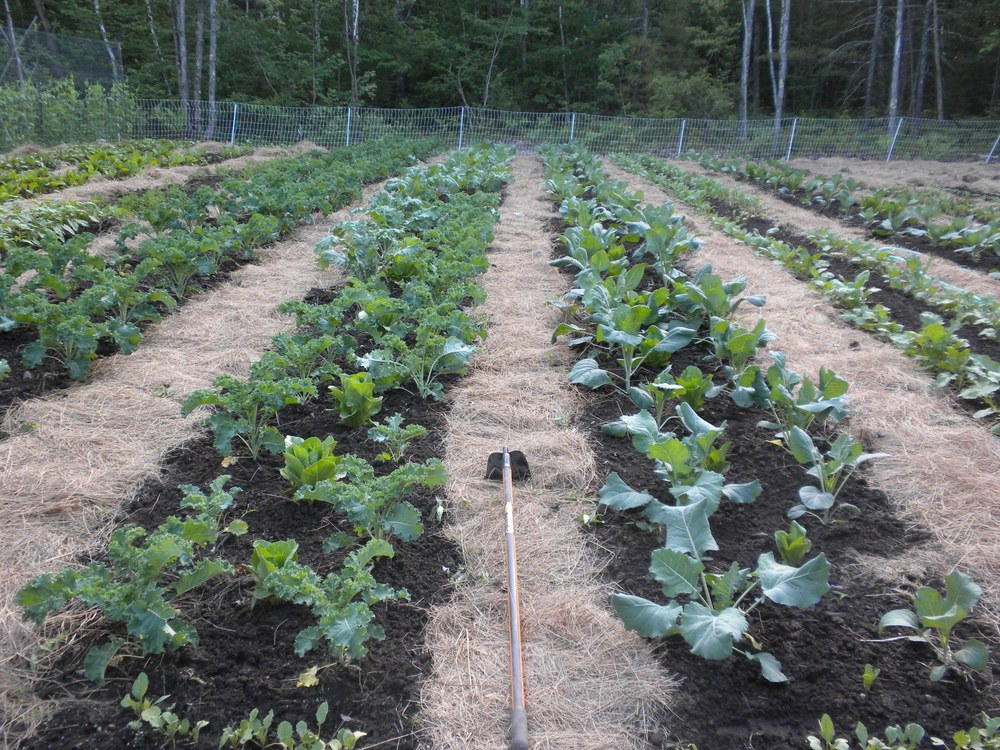 Produce Grown Seasonally on our Very Own Certified Organic Farm