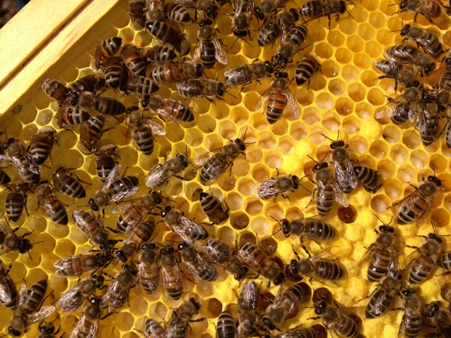 Our bees produce local honey