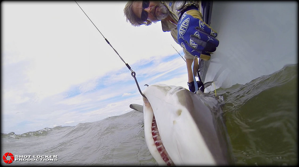 On location capturing and tagging sharks for Discovery Channel content.