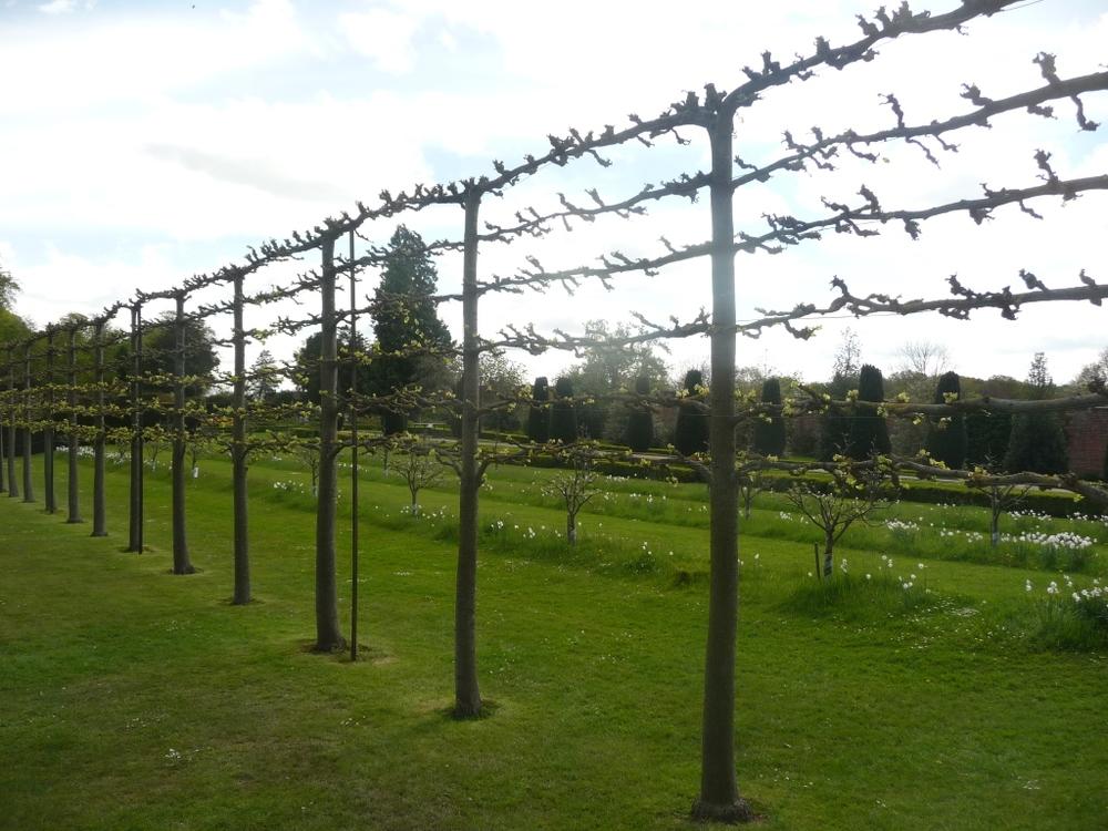 espalier-fence-11.jpg