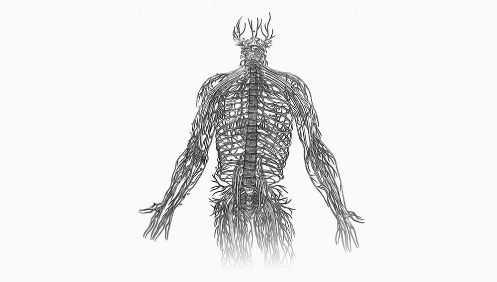 nerves.png