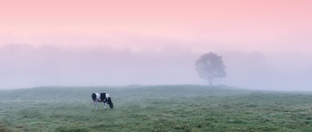 FoggyMoorning.jpg