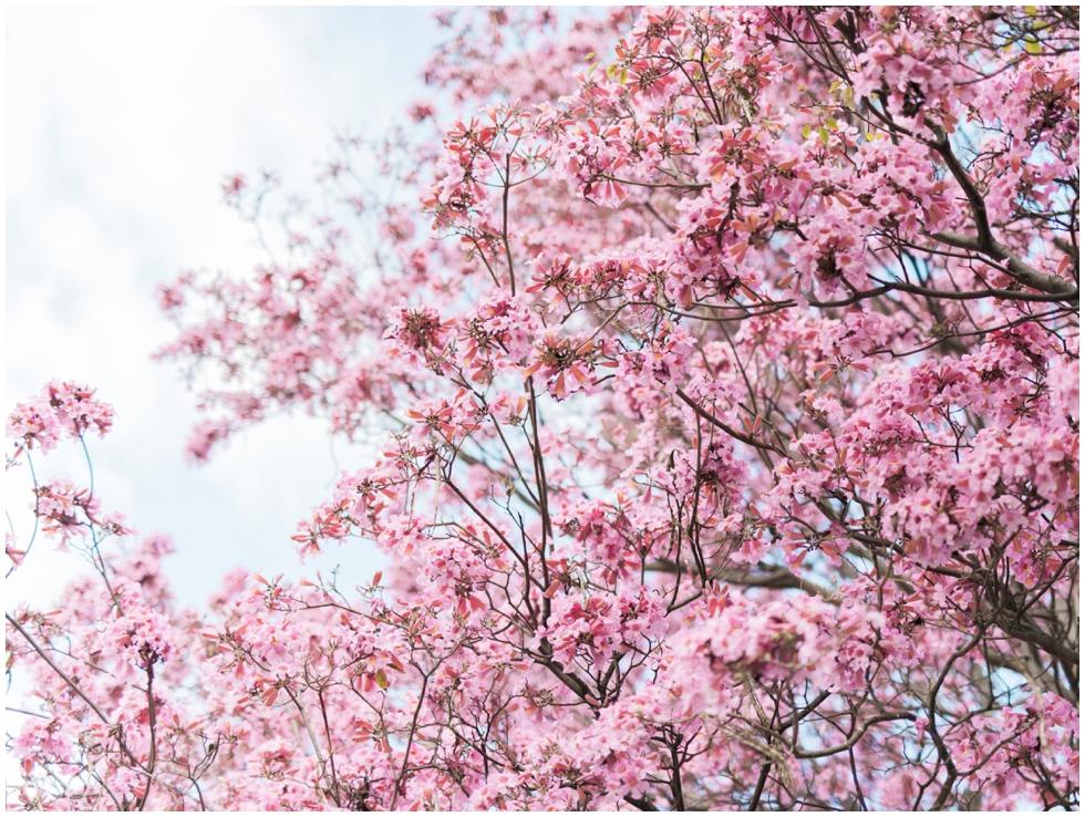 los-angeles-arboretum-engagement-parisastuart_0002.jpg
