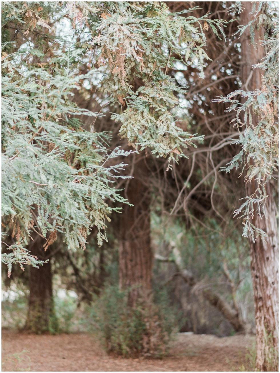 redwoods-engagement-sunandjohn_0001.jpg