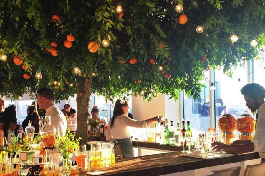 giant citrus tree 1.jpg