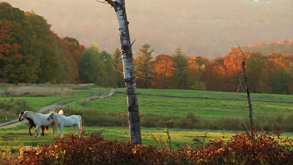 horses[east burke, vt]